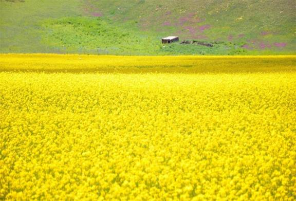 青海湖、茶卡盐湖、祁连、门源、塔尔寺、互助常规四日游